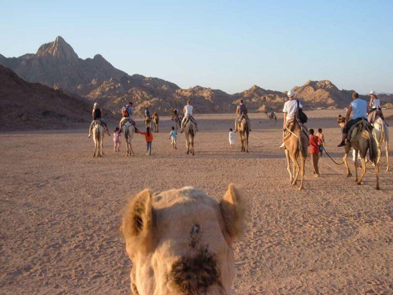 Екскурсія на верблюдах