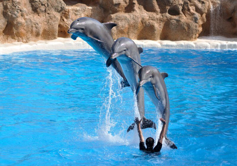 парк Дельфінів